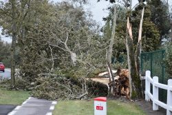 STORM ODETTE – 355 interventies stormschade