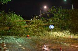 STORM ODETTE – 187 interventies voor stormschade om 21u